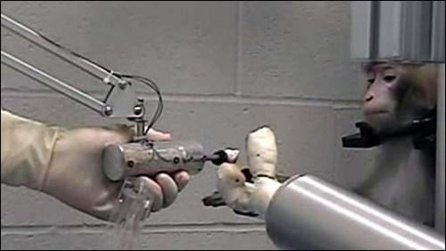 Monkey_using_a_robotic_arm